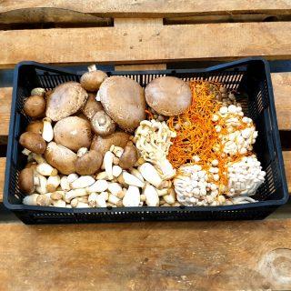 Pilze, Champignons und Trüffel