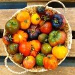 Raritäten Tomaten
