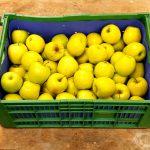 steir. Apfel Golden Delicius