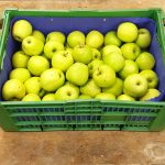 steir. Apfel Granny Smith
